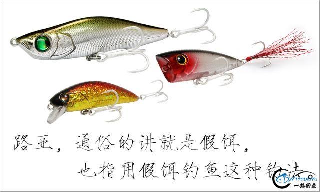 不一样的钓鱼,都是食肉鱼!你能认出几种来?-1.jpg