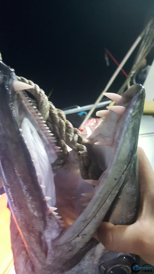 钓鱼人的海上大餐竟然是烧烤金枪鱼和金枪鱼刺身,真的好奢侈-13.jpg