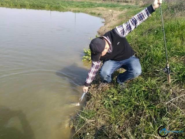 放牛哥也玩腐败塘,克隆鱼在早春的基里路亚鲈鱼-5.jpg