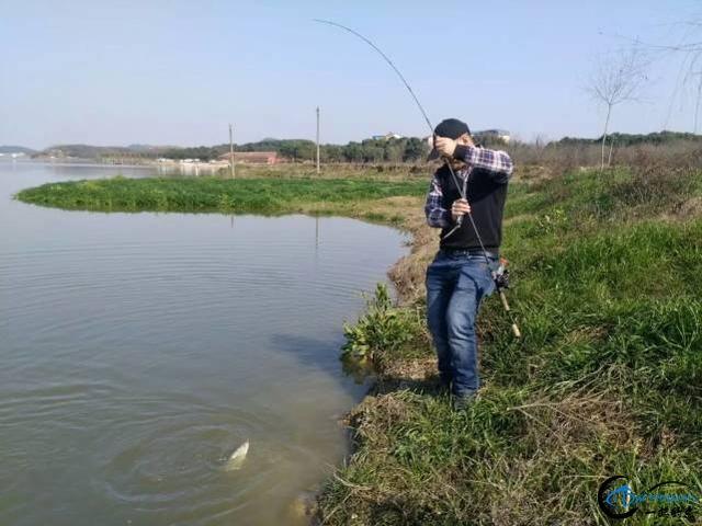 放牛哥也玩腐败塘,克隆鱼在早春的基里路亚鲈鱼-4.jpg