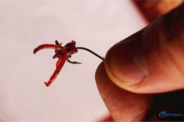 秋季野钓,分享几款常用活饵的使用技巧和装钩技巧!-3.jpg