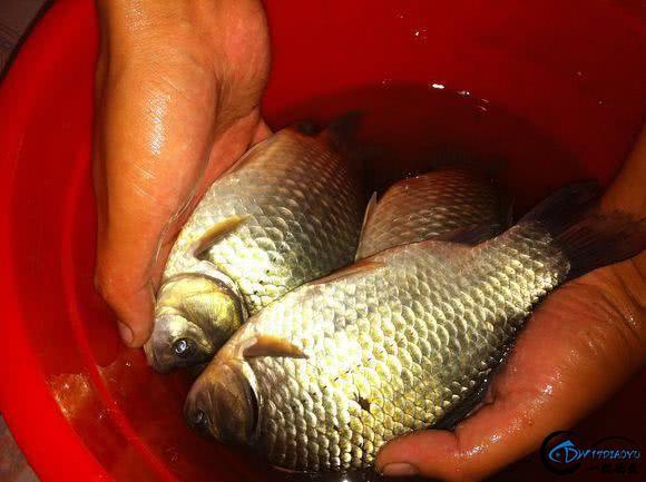 作为一个钓鱼爱好者,你一个月钓几次鱼-10.jpg