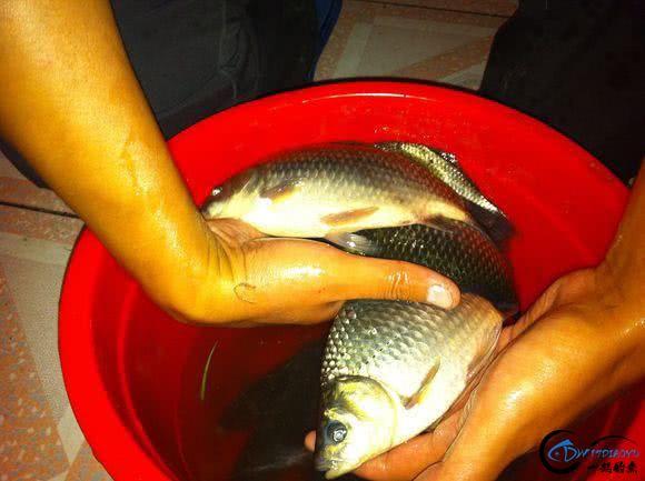 作为一个钓鱼爱好者,你一个月钓几次鱼-5.jpg