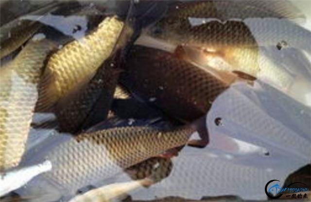 两款钓鲫鲤的中药窝料配方,入水就能快速上鱼-1.jpg
