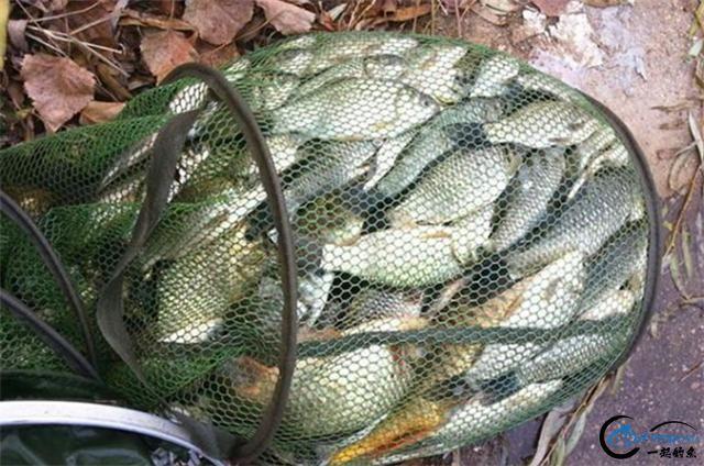两款钓鲫鲤的中药窝料配方,入水就能快速上鱼-6.jpg