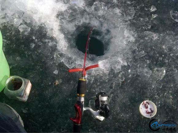 """在北方冰钓""""小公鱼""""要是碰上鱼窝,那杆就根本停不下来-17.jpg"""