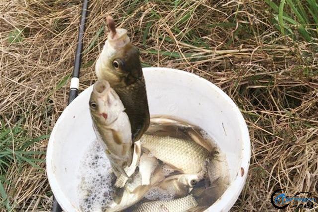 使用粮食做钓鱼饵料,不仅制作简单效果好,而且更能节省成本!-1.jpg