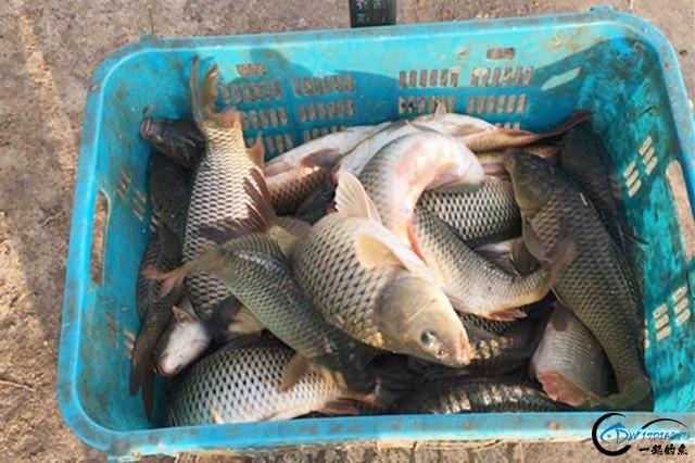 使用粮食做钓鱼饵料,不仅制作简单效果好,而且更能节省成本!-4.jpg