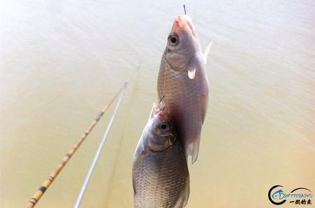 这款纯天然用饵配方,制作过程很简单,鲫鱼、鲤鱼都喜欢!-3.jpg