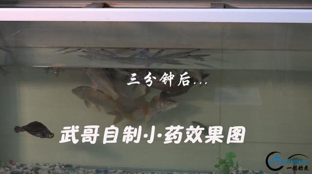 没想到200多元的鱼竿,也能钓到17.6斤的大鱼,你知道为什么吗?-1.jpg