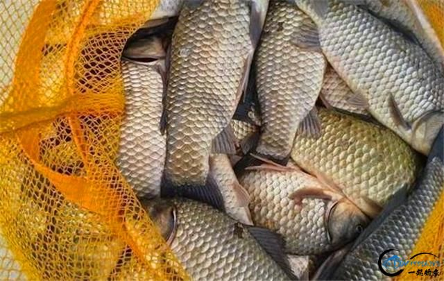 野钓打窝这几个问题把握好,留鱼聚鱼时间才会更长-3.jpg