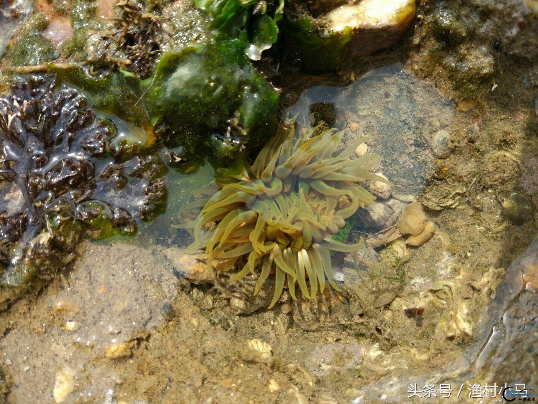 海边退潮赶海乐趣多,经常可以捡到小海鲜!-2.jpg