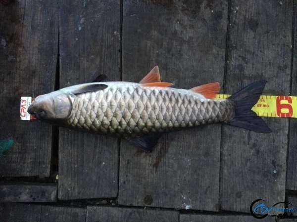 浅谈溪流军鱼的路亚钓法-1.jpg