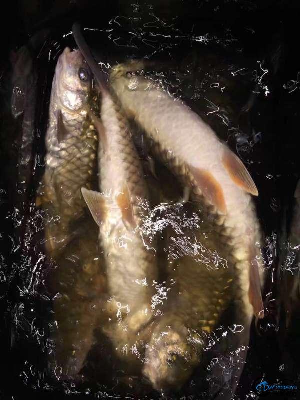 浅谈溪流军鱼的路亚钓法-9.jpg