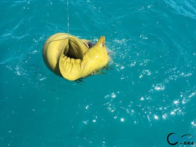 美国大白鲨系列电影看多了,今天总算知道钓鲨鱼到底有多疯狂-4.jpg
