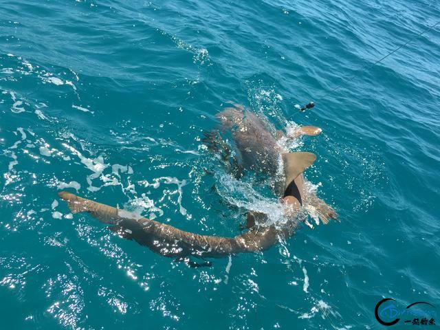 美国大白鲨系列电影看多了,今天总算知道钓鲨鱼到底有多疯狂-10.jpg