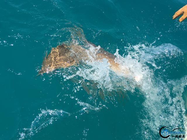 美国大白鲨系列电影看多了,今天总算知道钓鲨鱼到底有多疯狂-9.jpg