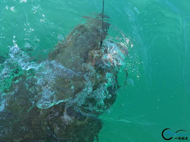300磅的巨型石斑3分钟被狂拉出水,麒麟臂已经修炼大成境界-18.jpg