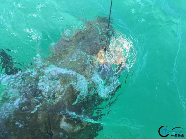 300磅的巨型石斑3分钟被狂拉出水,麒麟臂已经修炼大成境界-19.jpg