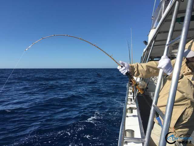 钓到大鱼兴奋的拉出水瞬间惊出一身冷汗,大鱼被吃的仅剩鱼头-4.jpg