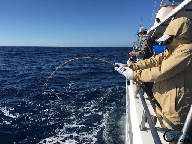 钓到大鱼兴奋的拉出水瞬间惊出一身冷汗,大鱼被吃的仅剩鱼头-3.jpg