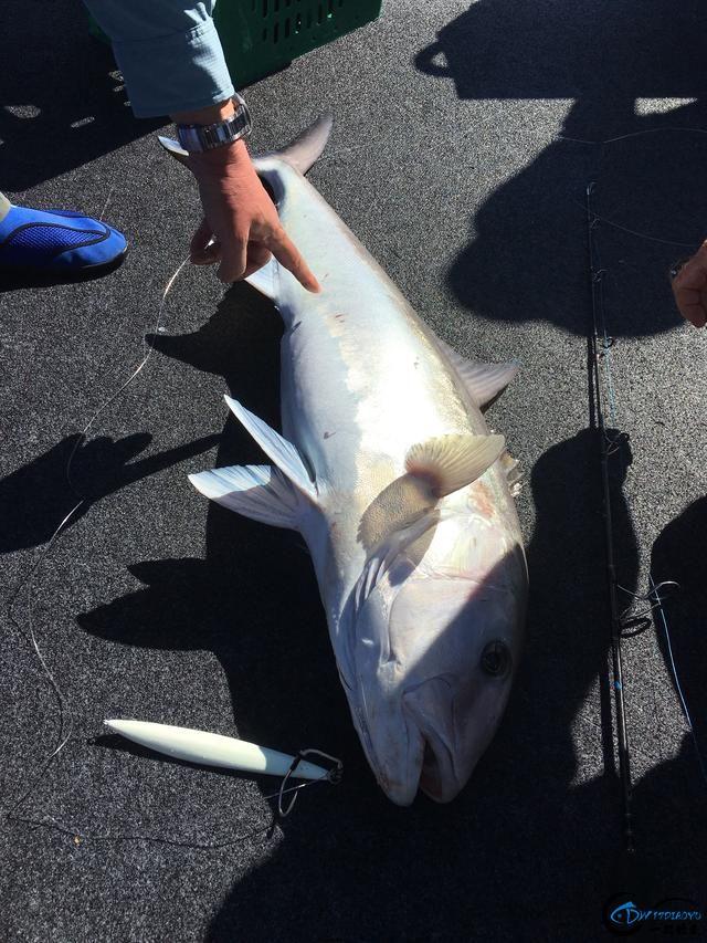 钓到大鱼兴奋的拉出水瞬间惊出一身冷汗,大鱼被吃的仅剩鱼头-9.jpg