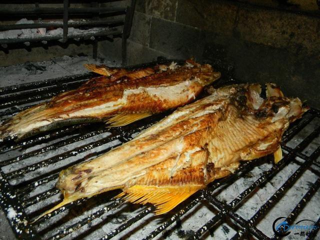 如此漂亮的黄金河虎鱼竟引来无数的吃货,被逼无奈烤两条尝尝-17.jpg