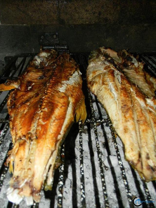 如此漂亮的黄金河虎鱼竟引来无数的吃货,被逼无奈烤两条尝尝-18.jpg