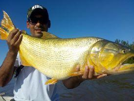 如此漂亮的黄金河虎鱼竟引来无数的吃货,被逼无奈烤两条尝尝-13.jpg