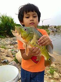 国外最为普通的食用鱼却被国人炒成了天价,谁还在养这些鱼?-14.jpg