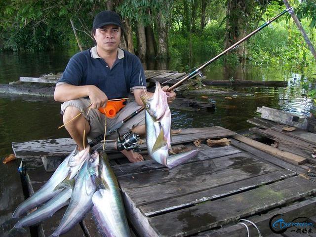 同样是受过九年义务教育,这位钓鱼人为何就是如此的优秀?-22.jpg