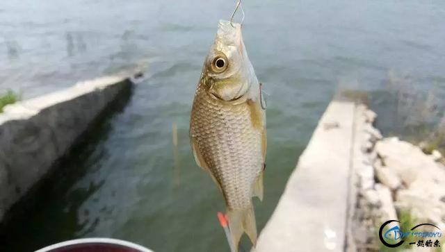 冬季上鱼难?这六点注意好,一钓一个准-2.jpg