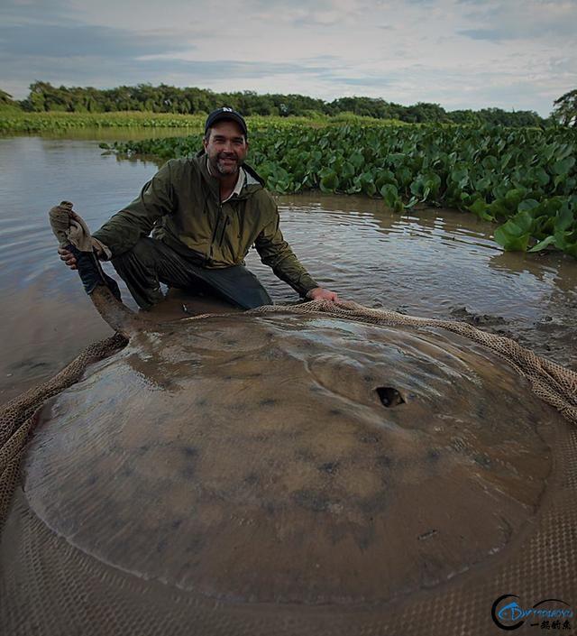 湄公河巨型魔鬼鱼才是淡水钓终极目标,让你知道什么才是大鱼-3.jpg