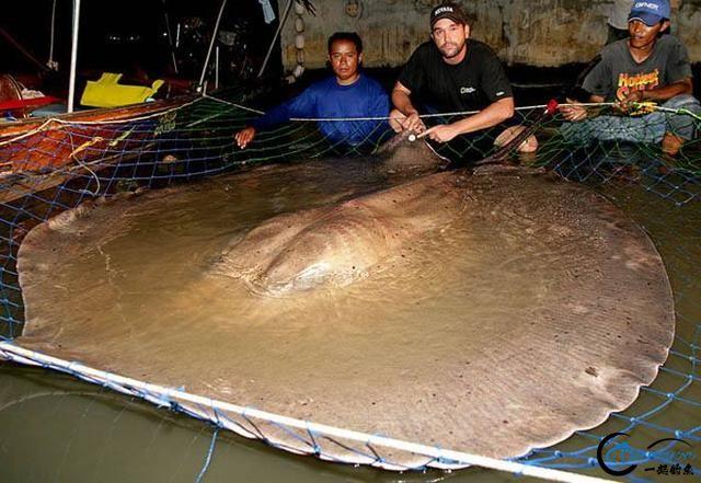 湄公河巨型魔鬼鱼才是淡水钓终极目标,让你知道什么才是大鱼-6.jpg