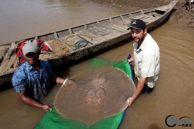 湄公河巨型魔鬼鱼才是淡水钓终极目标,让你知道什么才是大鱼-11.jpg