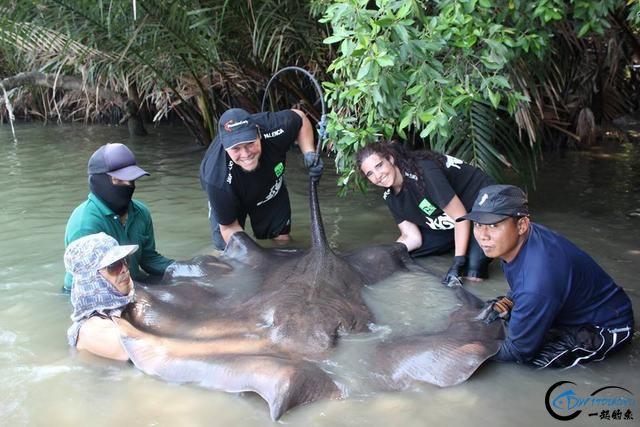 湄公河巨型魔鬼鱼才是淡水钓终极目标,让你知道什么才是大鱼-16.jpg