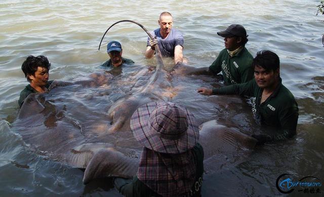 湄公河巨型魔鬼鱼才是淡水钓终极目标,让你知道什么才是大鱼-10.jpg