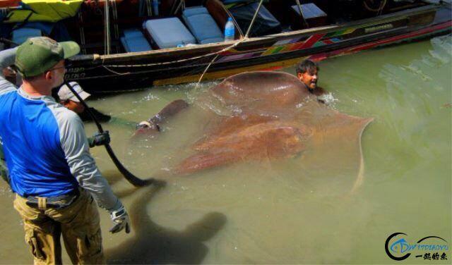 湄公河巨型魔鬼鱼才是淡水钓终极目标,让你知道什么才是大鱼-14.jpg