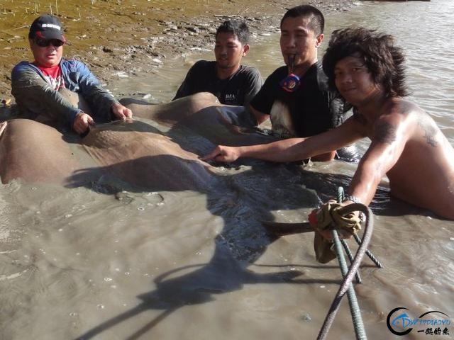 湄公河巨型魔鬼鱼才是淡水钓终极目标,让你知道什么才是大鱼-9.jpg
