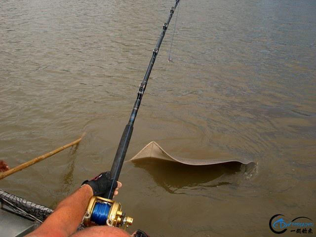 世界最巅峰的湄公河魔鬼鱼挑战赛,中国钓鱼人竟还是一片空白-5.jpg