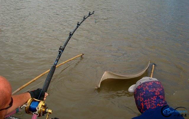 世界最巅峰的湄公河魔鬼鱼挑战赛,中国钓鱼人竟还是一片空白-6.jpg