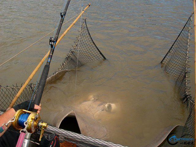 世界最巅峰的湄公河魔鬼鱼挑战赛,中国钓鱼人竟还是一片空白-8.jpg