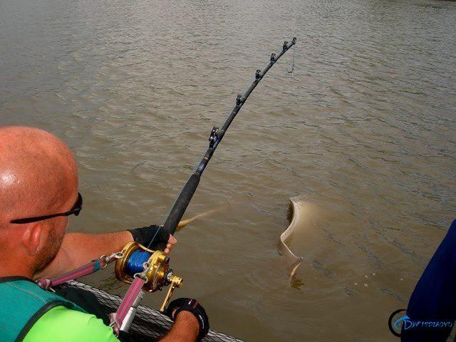 世界最巅峰的湄公河魔鬼鱼挑战赛,中国钓鱼人竟还是一片空白-4.jpg