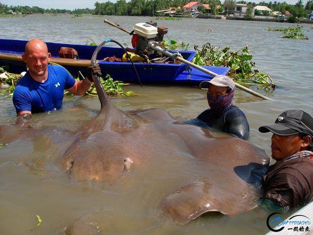 世界最巅峰的湄公河魔鬼鱼挑战赛,中国钓鱼人竟还是一片空白-14.jpg