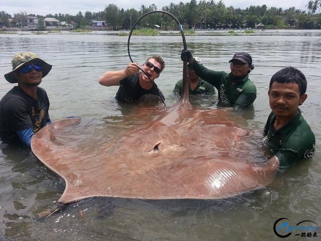 世界最巅峰的湄公河魔鬼鱼挑战赛,中国钓鱼人竟还是一片空白-20.jpg