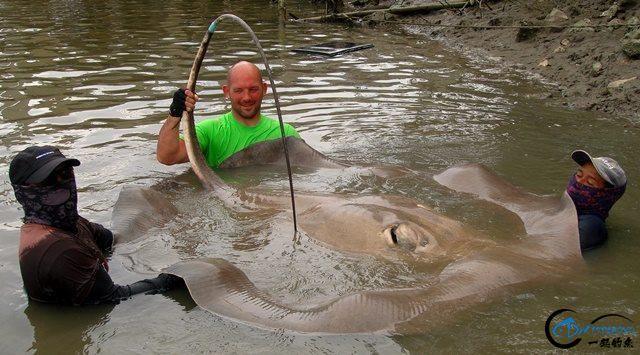 世界最巅峰的湄公河魔鬼鱼挑战赛,中国钓鱼人竟还是一片空白-11.jpg