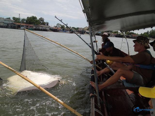 世界最巅峰的湄公河魔鬼鱼挑战赛,中国钓鱼人竟还是一片空白-18.jpg