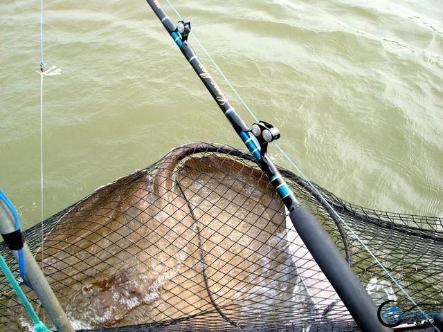 世界最巅峰的湄公河魔鬼鱼挑战赛,中国钓鱼人竟还是一片空白-10.jpg