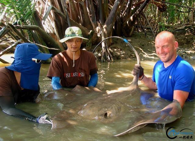 世界最巅峰的湄公河魔鬼鱼挑战赛,中国钓鱼人竟还是一片空白-15.jpg
