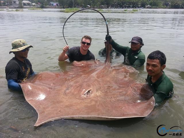 世界最巅峰的湄公河魔鬼鱼挑战赛,中国钓鱼人竟还是一片空白-19.jpg